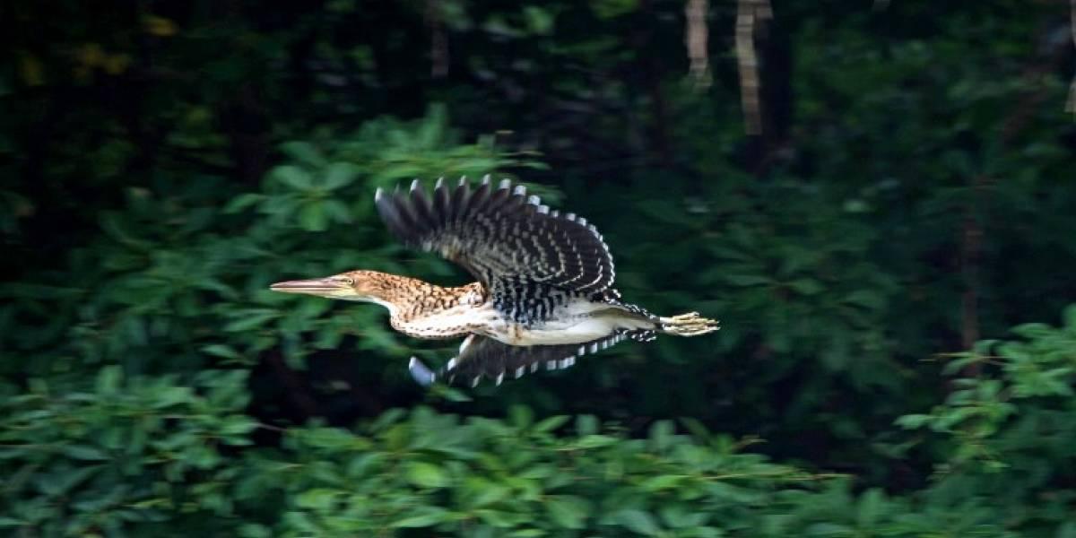 Explota la amazonía con 381 nuevas especies de plantas y animales