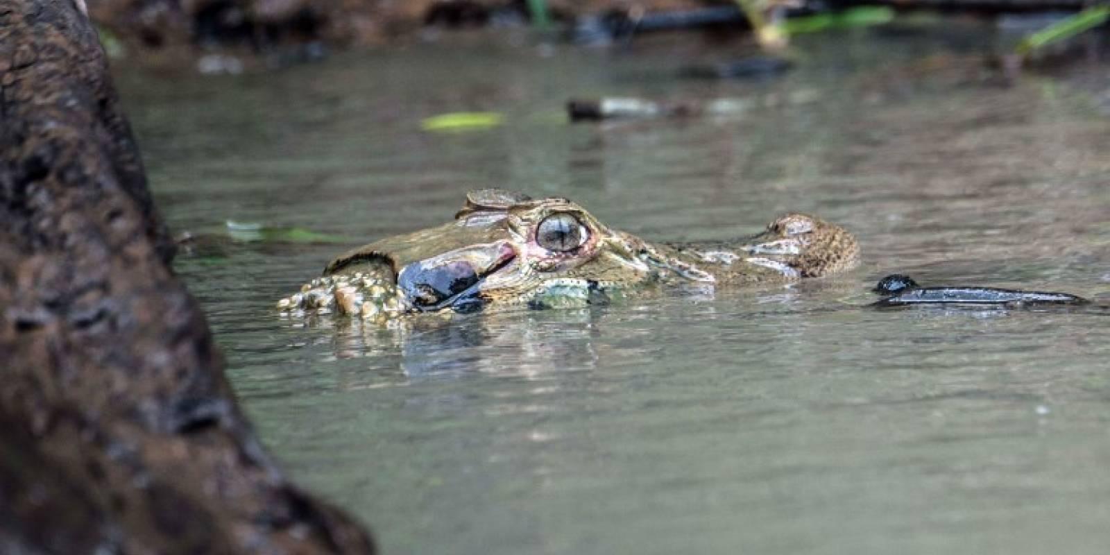 Especies en la Amazonía