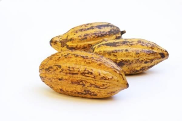 Sustancias del cacao protegen de males cardiovasculares, indica estudio