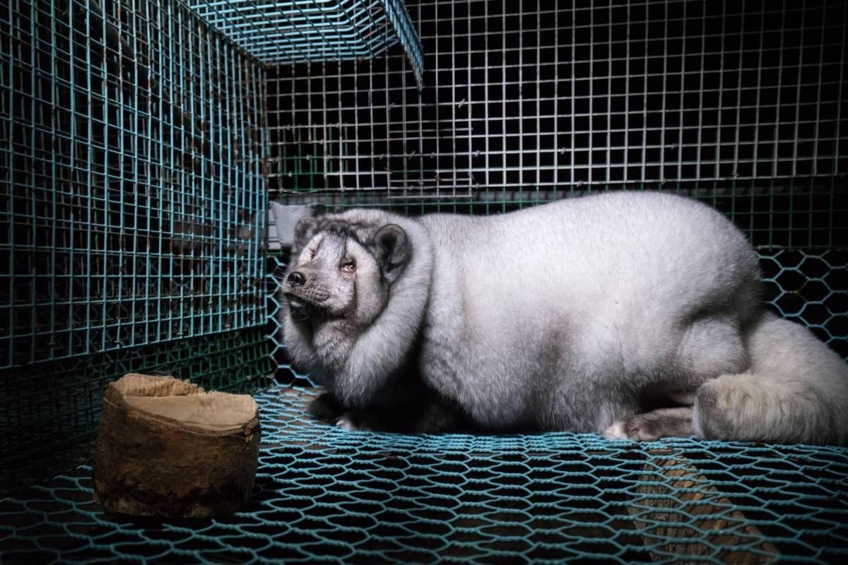 Facebook: Oikeutta eläimille Zorro