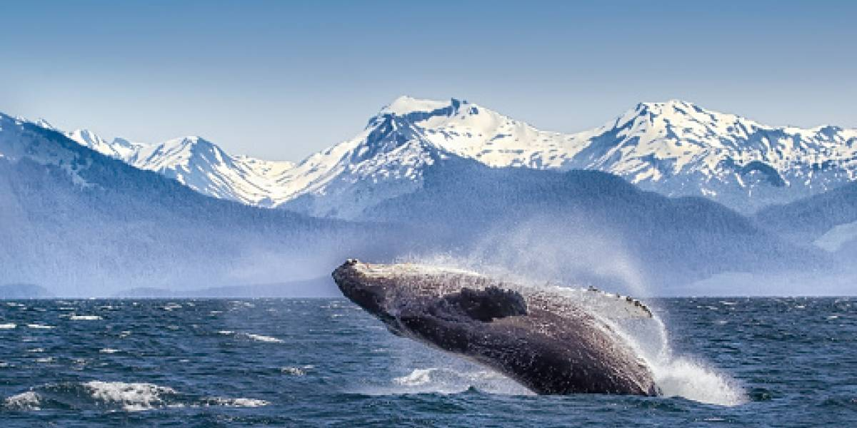 Los antepasados de las ballenas tenían dientes afilados para devorar presas