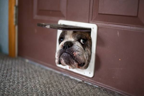 Envían a la Asamblea proyecto reformatorio para sancionar maltrato animal