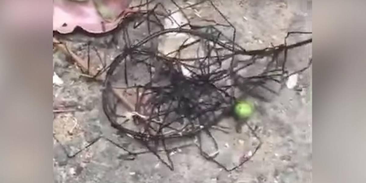 VIDEO. Extraña criatura de aspecto alienígena desconcierta alos internautas