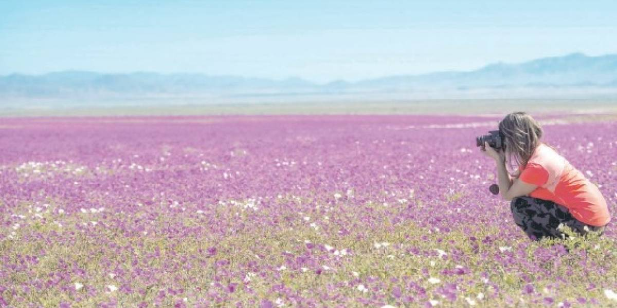 El florecimiento del desierto más árido del mundo