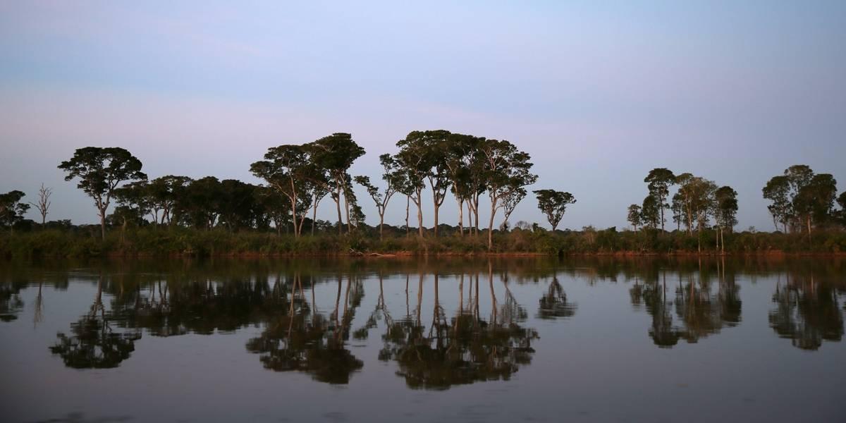 Brasil perdeu 9,5% das florestas entre os anos 2000 e 2014