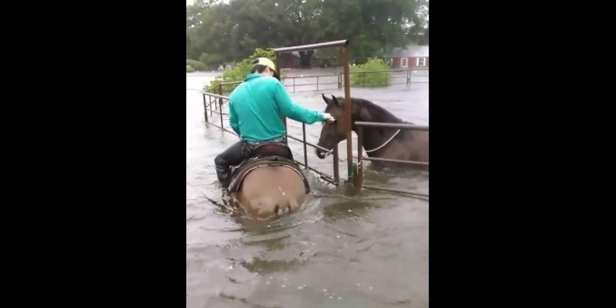 VIDEO. Conmovedor rescate de un caballo atrapado por las inundaciones en Texas