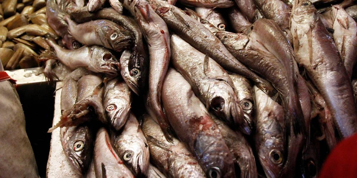 La merluza chilena tendrá su día a partir de este año