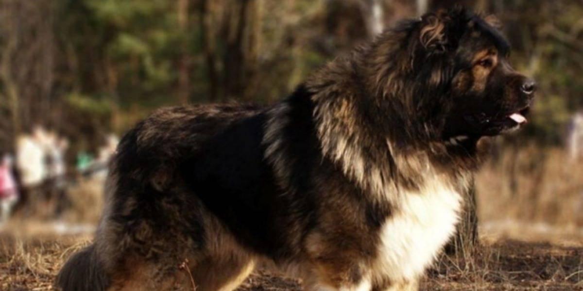 Terrible: Corte de EEUU ordena cortar cuerdas vocales de unos perros porque ladridos molestaban a los vecinos