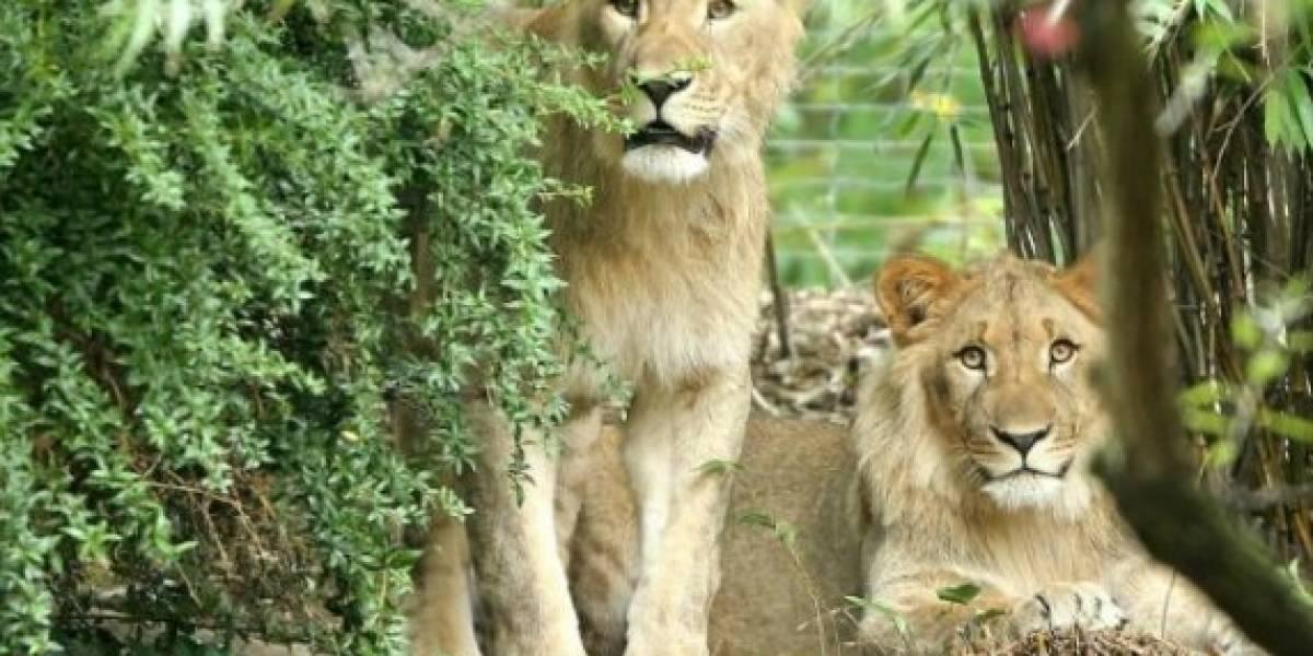Mujer promete donar $22 millones a un zoológico