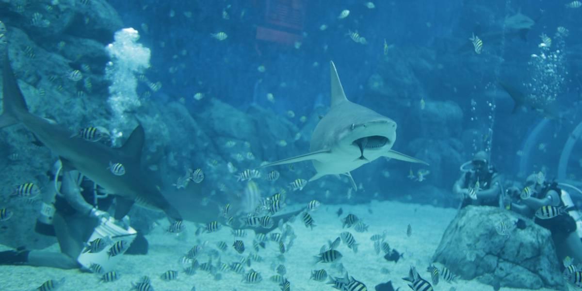 Video: Hombre se lanzó al mar huyendo de la policía, pero allí le esperaba un tiburón