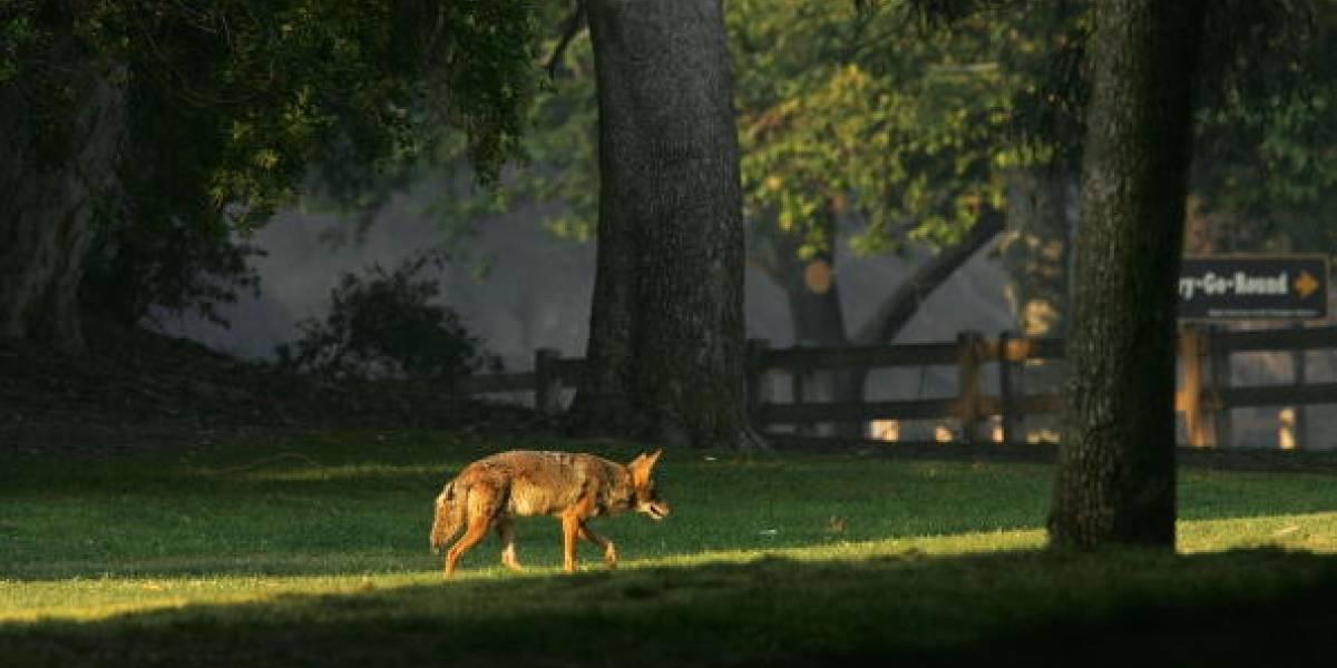 Advierten existencia de 'perros zombies' en EEUU