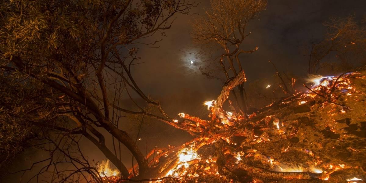 """Las impactantes imágenes del """"mayor incendio en la historia"""" de Los Ángeles que ya consumió dos mil hectáreas"""