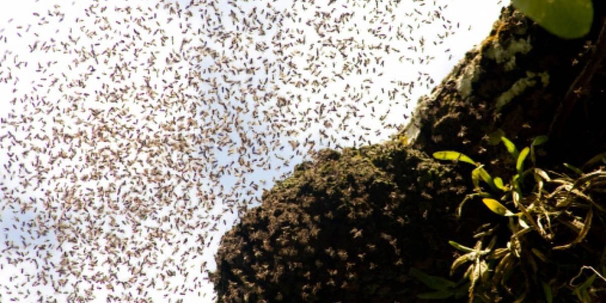 Polémica por embarazada que posó con abejas sobre su vientre