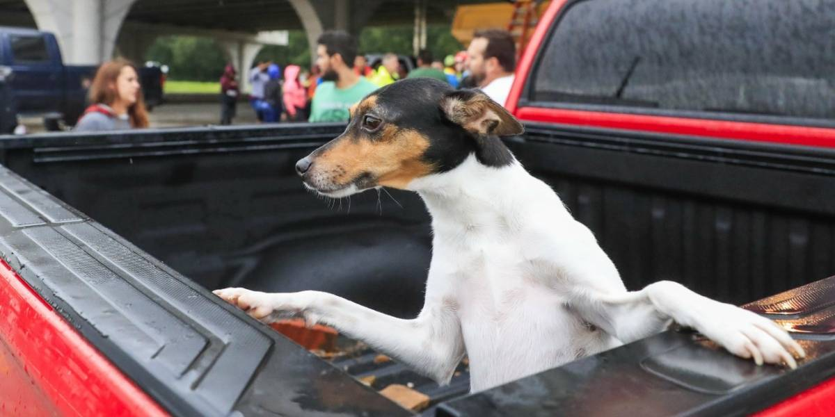 Cinco consejos para viajar con su perro en carro
