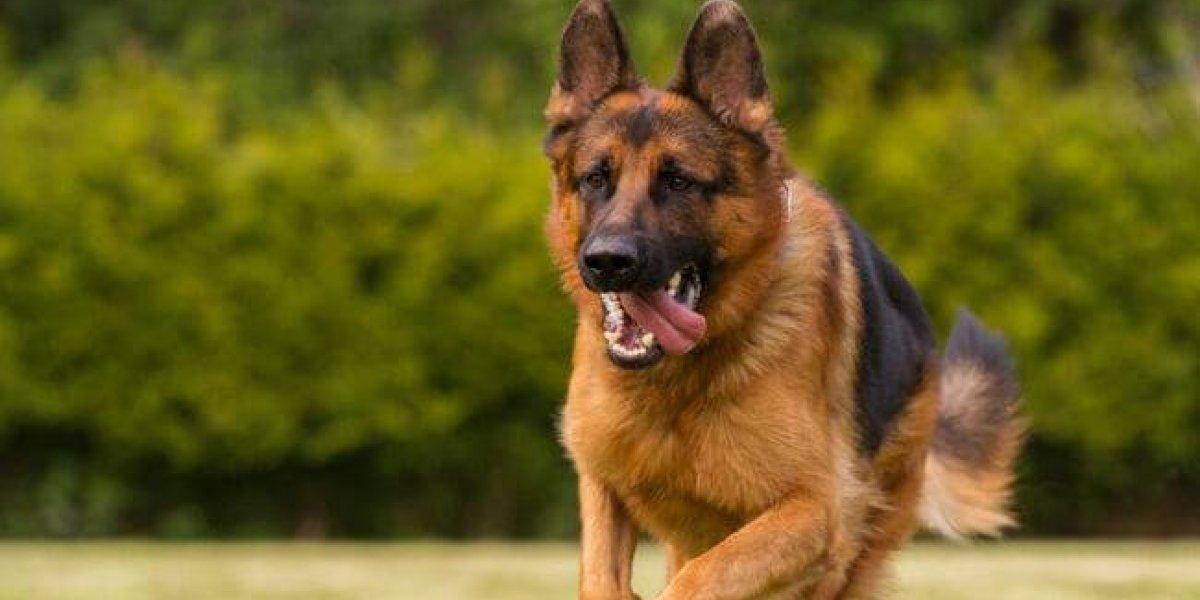 Maldad absoluta: dejó morir asfixiados a tres perros tras mantenerlos encerrados por horas y a todo sol en una camioneta que robó