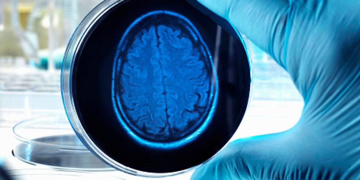 Identificada una molécula con potencial terapéutico contra el Alzheimer