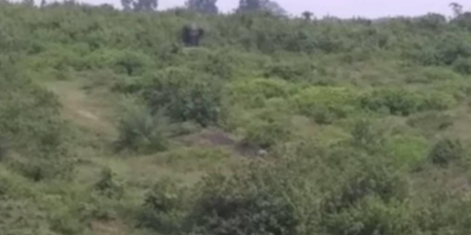 Muere aplastado hombre ebrio tras tomarse 'selfie' con elefante