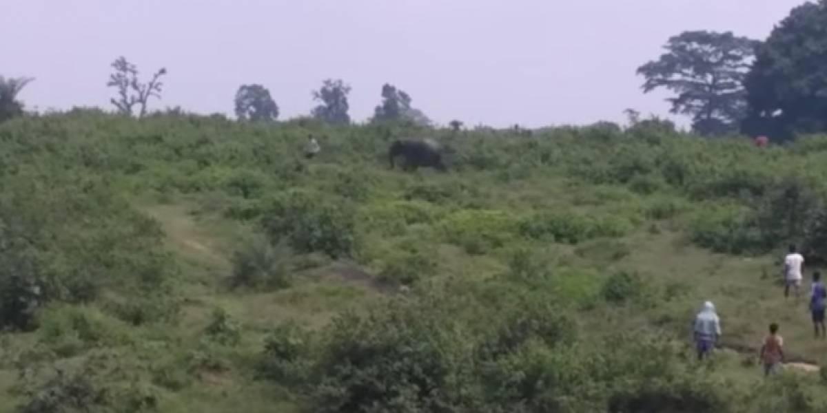 Elefante aplasta hasta la muerte a hombre que solo quería tomarse una selfie