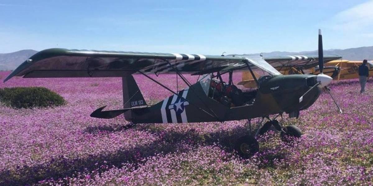 ¡Se pasaron! Aterrizaron con sus avionetas sobre el desierto florido e hicieron picnic en la zona protegida