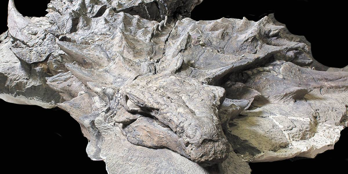 Conheça o fóssil de dinossauro mais bem cuidado do mundo