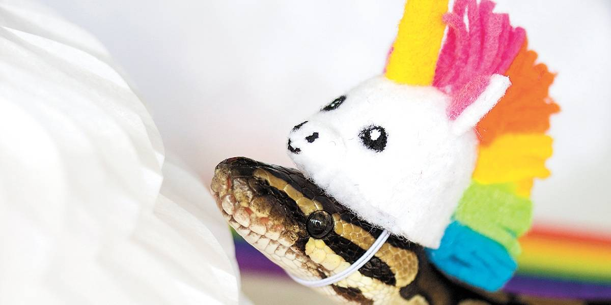 Conheça Snakey, a cobra de chapéu que arrasa no Facebook