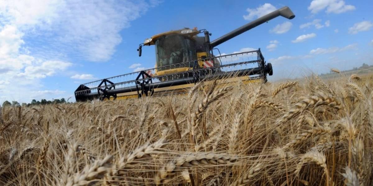 Precios de alimentos en el mundo caen ligeramente en agosto gracias a los cereales