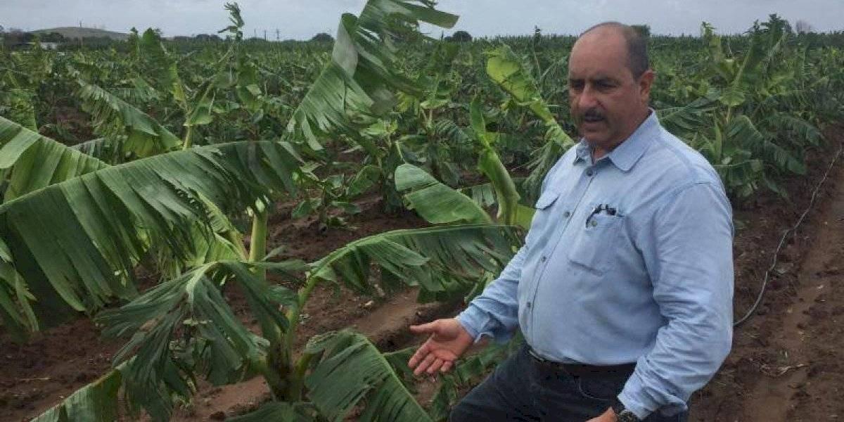 Agricultores tendrán que rendir cuentas tras recibir incentivos de Gobierno