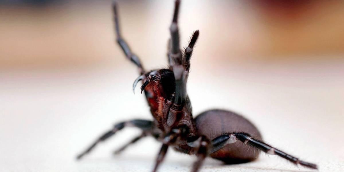 La pesadilla en que vivía un niño de 8 años: su padre le pegaba, lo obligaba a ver películas de terror y le introducía arañas en la boca
