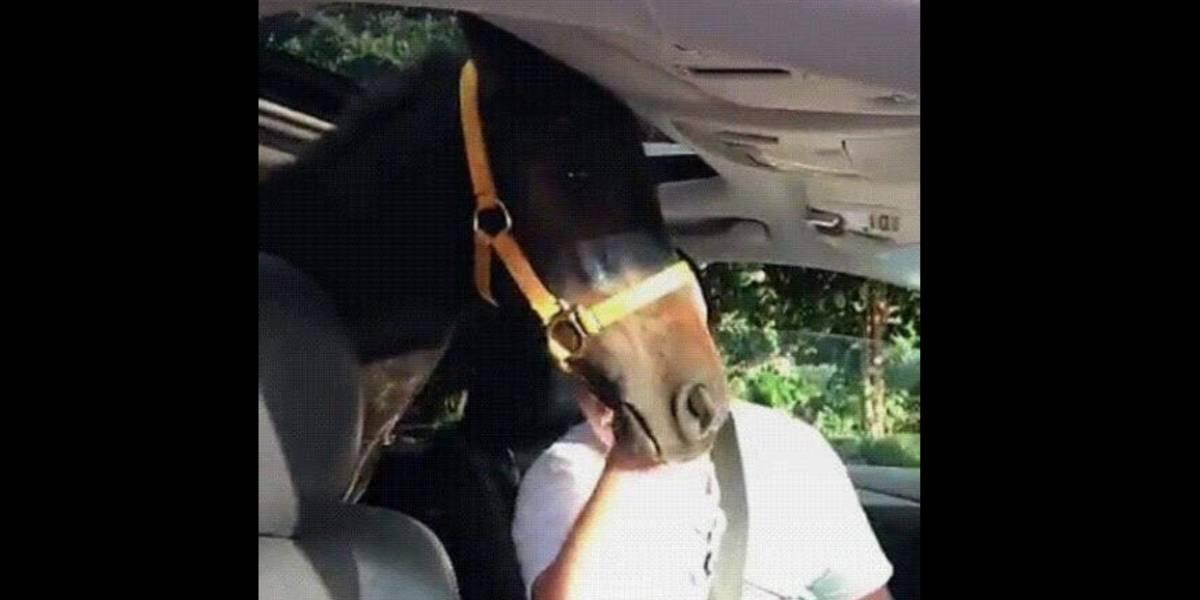 Joven de Luquillo protege a su yegua de Irma en su Lexus