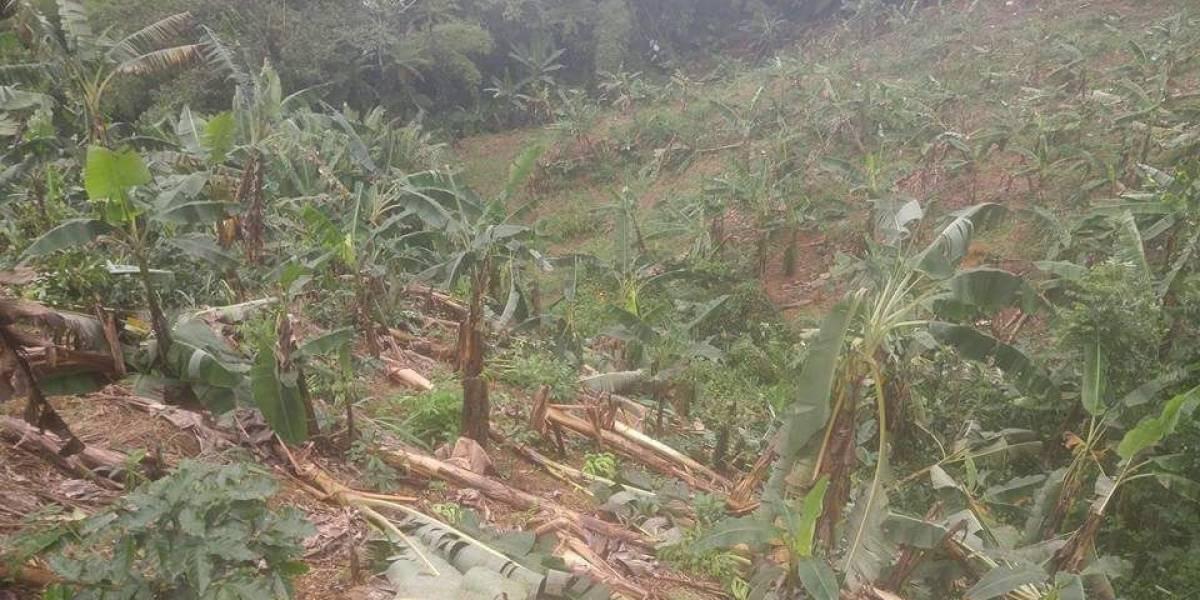 """""""Cuantiosas"""" las pérdidas agrícolas en la región centro oeste"""