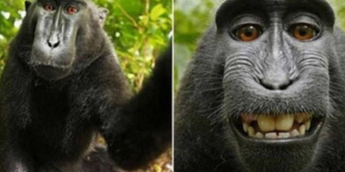 Demandas, bancarrota y un mono que se transformó en figura mundial: el fin de la trama de una de las selfies más famosas de la historia