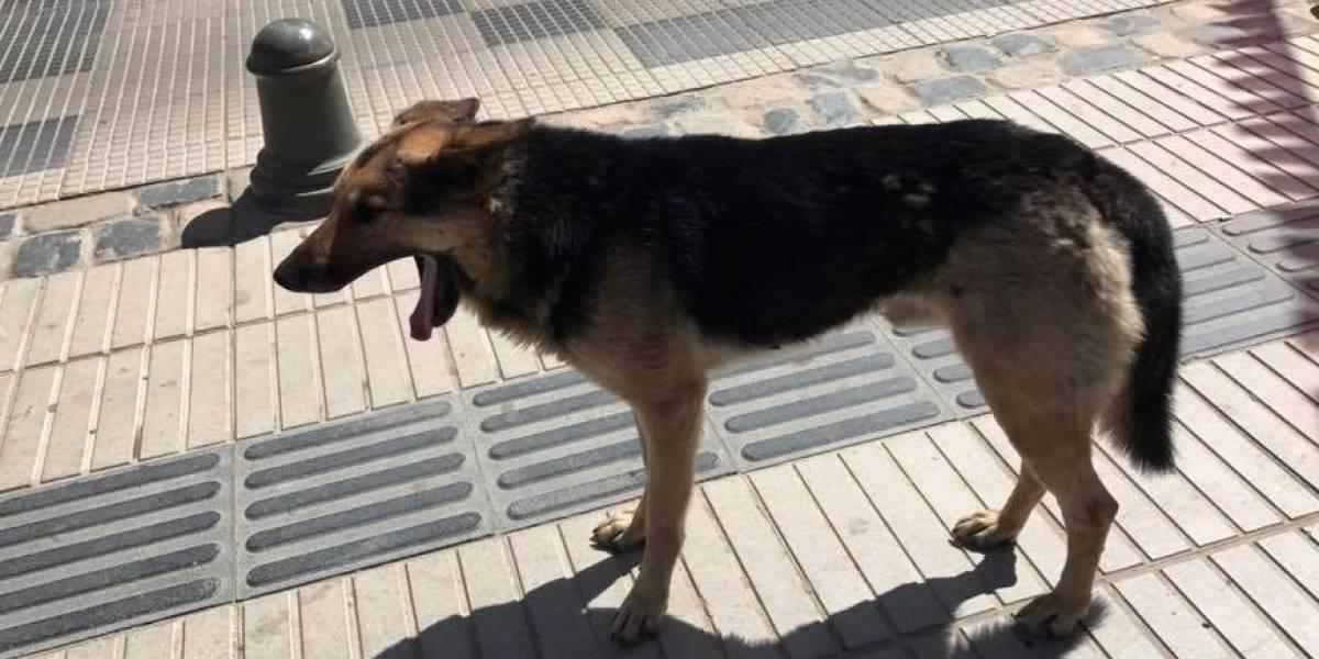 """Se hizo famoso a nivel mundial, pero tiene una """"perra vida"""": la triste historia del can que robó una empanada en plena entrevista"""