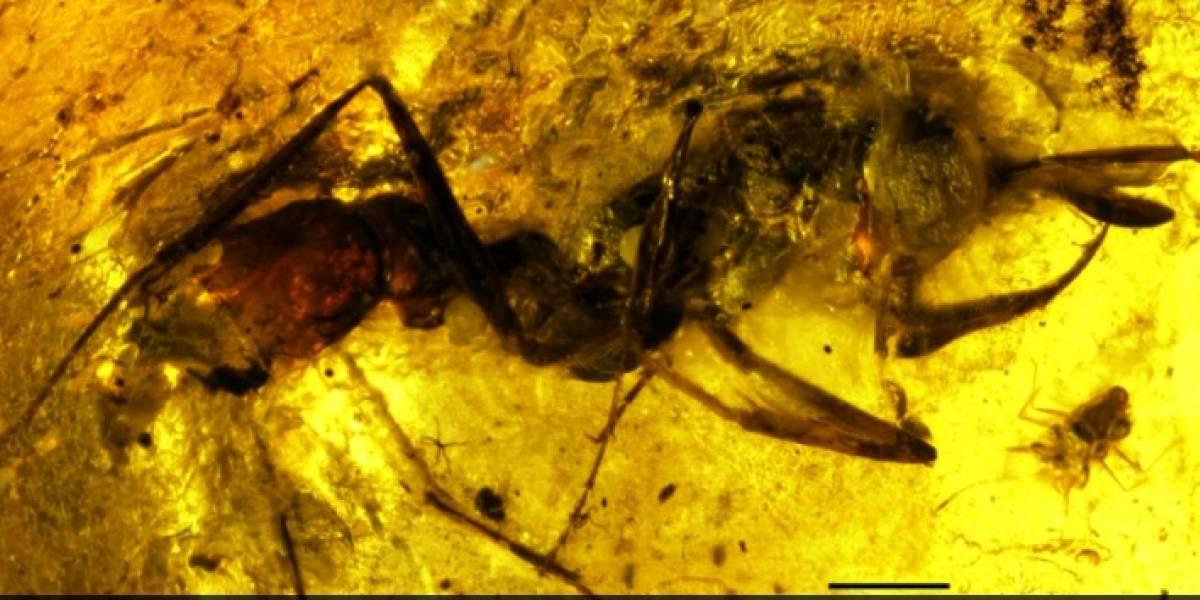 'Hormiga del infierno' desconcierta a los científicos