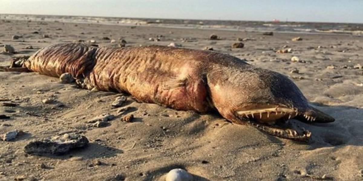La monstruosa criatura que apareció tras el huracán Harvey