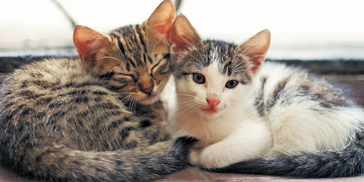 Quer saber o que o seu gato quer 'dizer'? Então fique de olho no rabo dele
