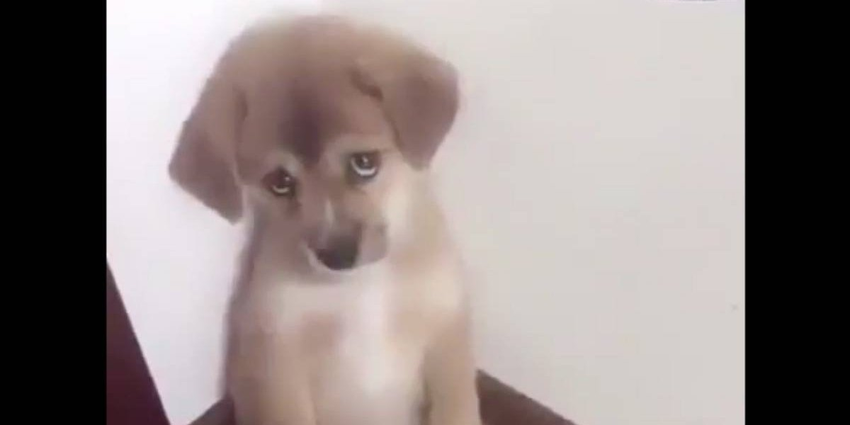 Adorable reacción de cachorro al recibir castigo