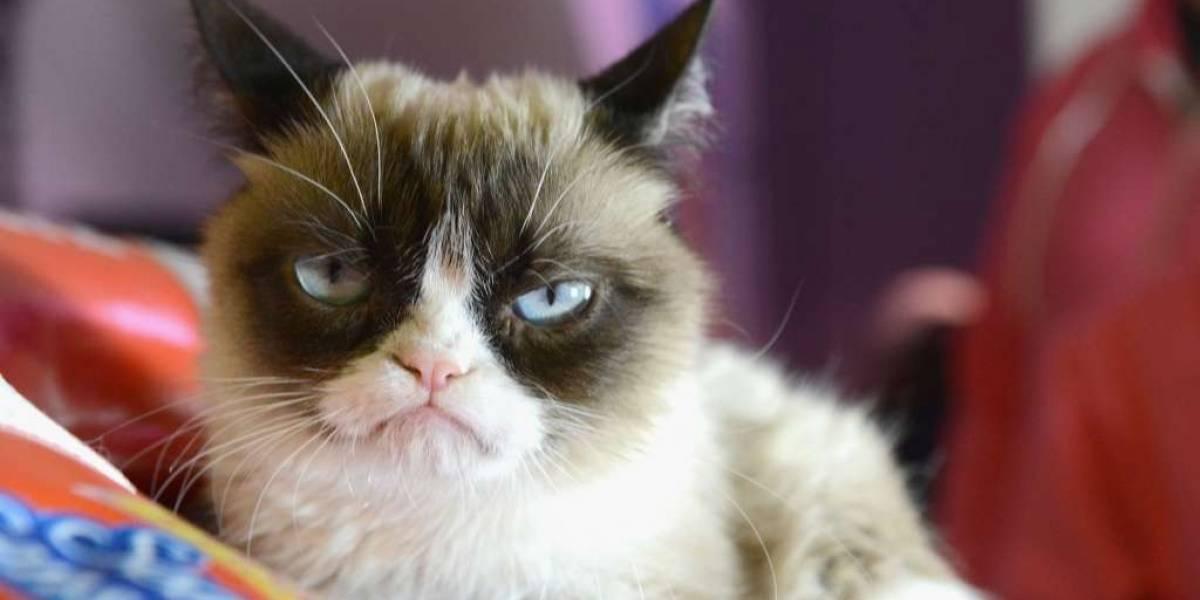 Científicos detectan vínculo entre parásito de los gatos y cáncer en humanos