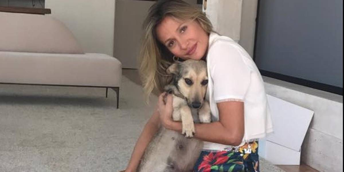 Pessoas desistem de adoção ao descobrirem que animais em feira de Luisa Mell não eram de raça
