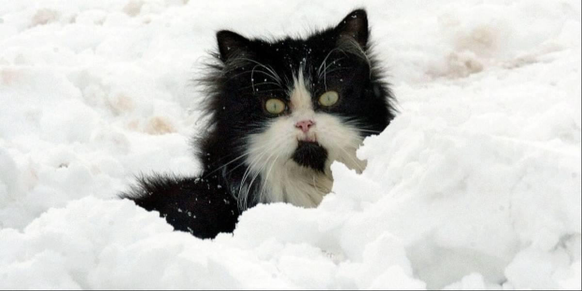 Vínculo entre un parásito en gatos y cáncer en humanos es encontrado