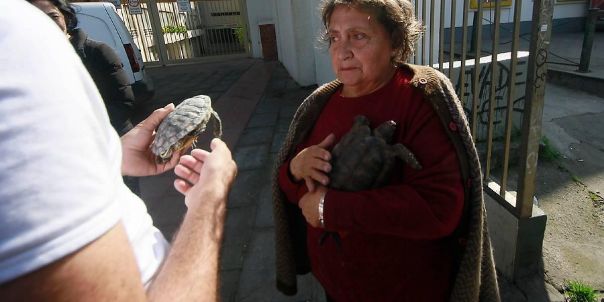 Salió ilesa y logró salvar a sus tortugas: la singular postal tras fuerte explosión en Bellavista