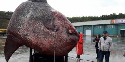 Capturan a monstruoso pez, pero no te imaginas qué pasó luego — Rusia