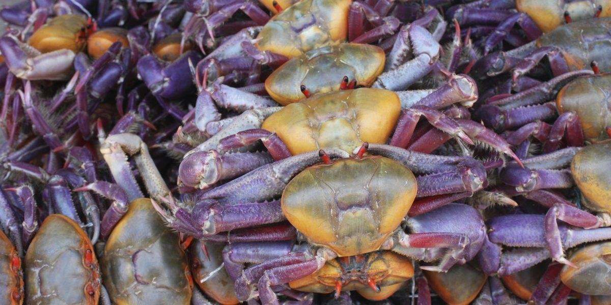 Hoy inicia la veda del cangrejo rojo que durará hasta el 15 de septiembre