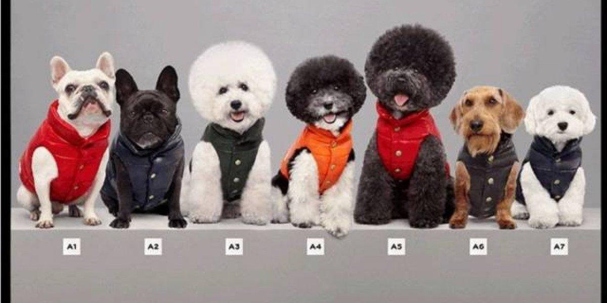 Marca italiana lança roupas de luxo para cachorro