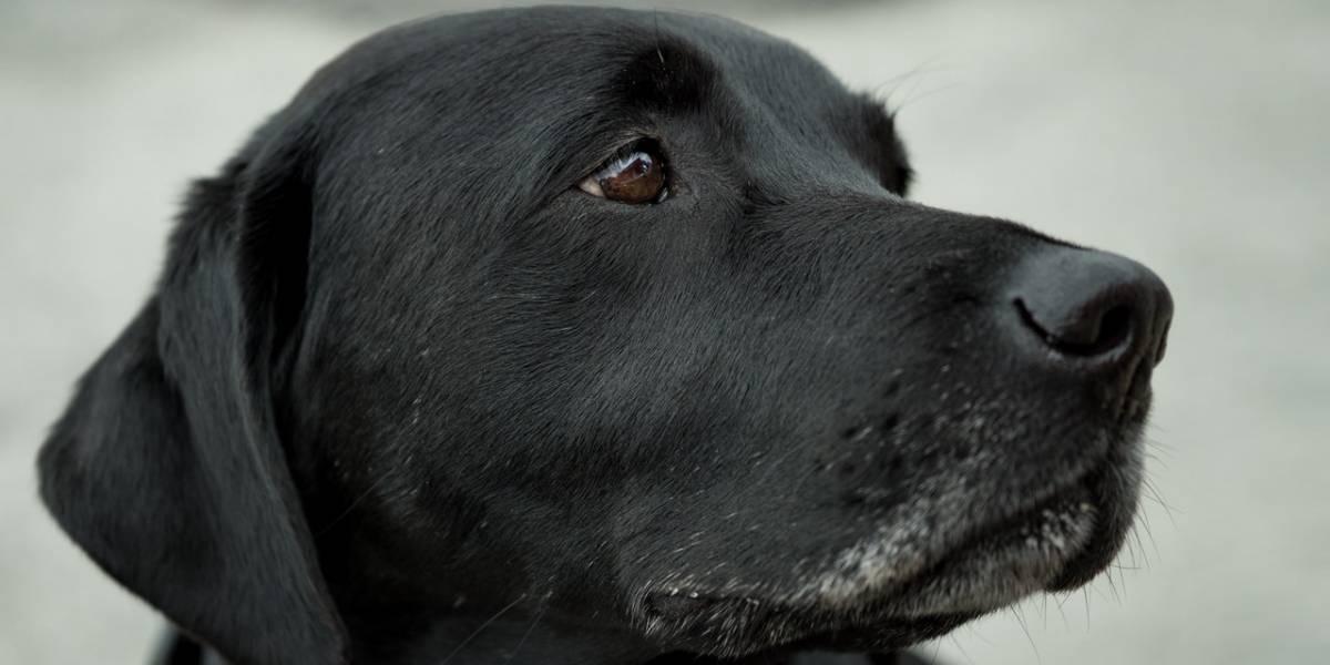 Tutora passa mal após morte de cachorrinha e é diagnosticada com 'coração partido'