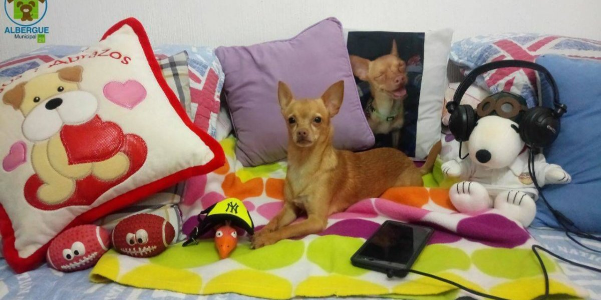 """Taquito"", el #PerroFiel guatemalteco de Shakira"