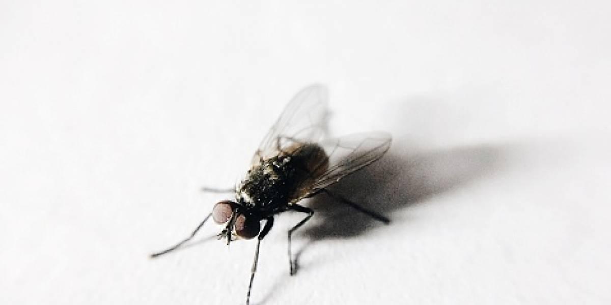 ¿Por qué es tan difícil matar a una mosca?