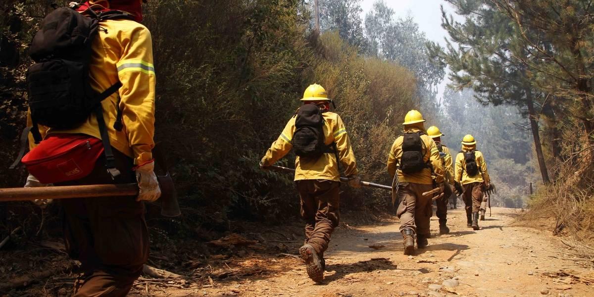 Incendios forestales: Nueve brigadistas de Conaf viajaron a Isla de Pascua