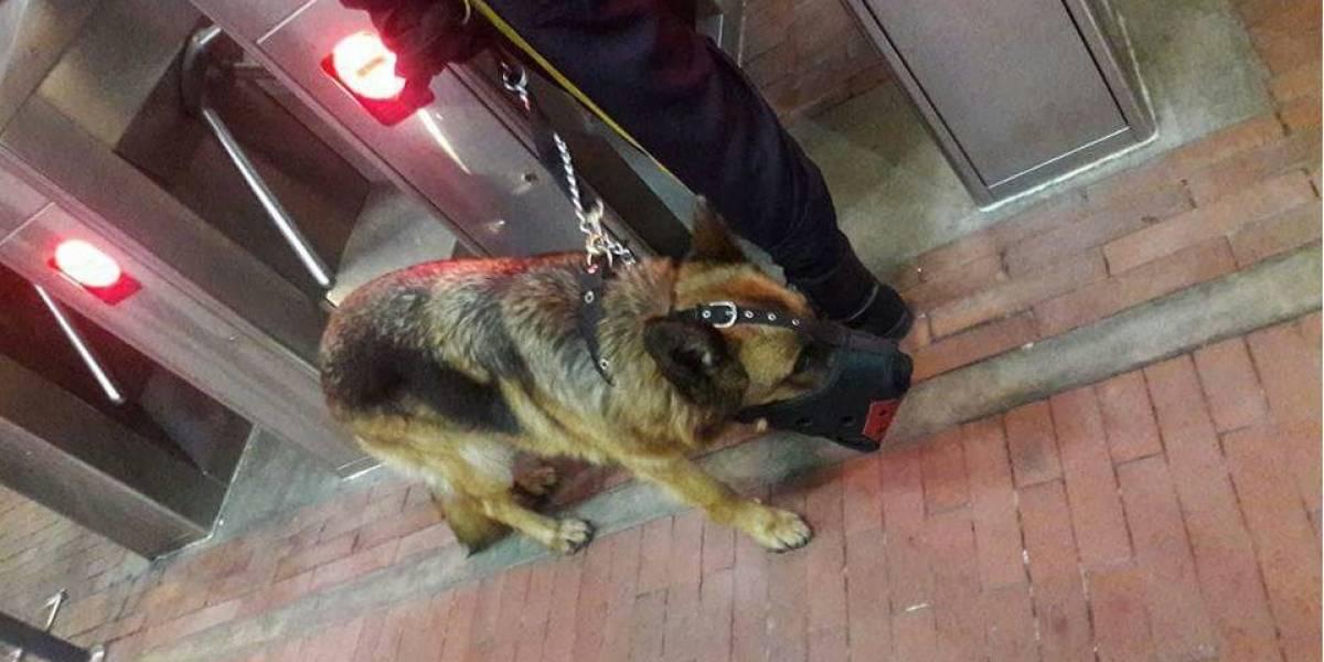 Denuncian maltrato animal en un portal de TransMilenio