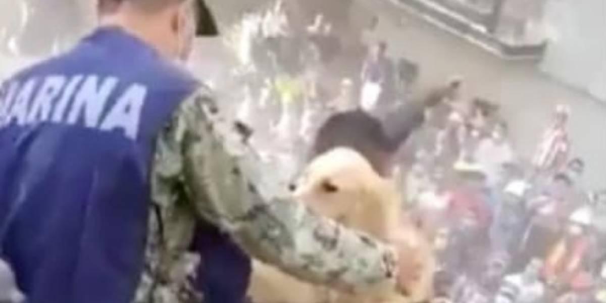 Video de perro rescatado en medio de los escombros en México conmueve las redes