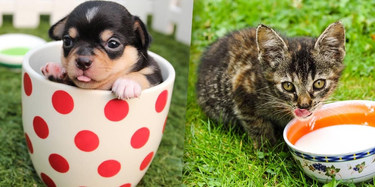 Donos de gatos são mais inteligentes que os de cachorros